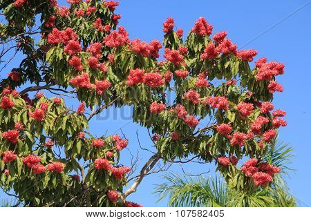 Red Blooming Tree