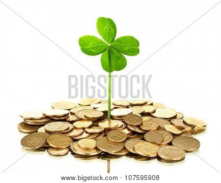 Clover leaf growing out of golden coins isolated on white