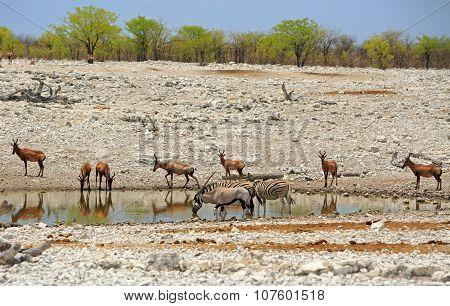 A busy waterhole in Etosha National Park