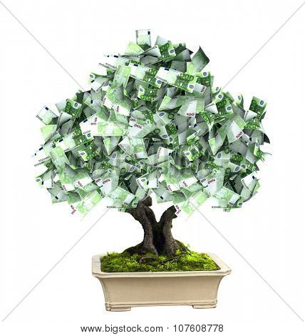 3d money tree with euro banknotes. Isolated on white background