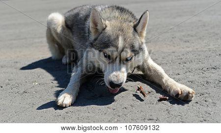My! greedy dog guard bits of stick.