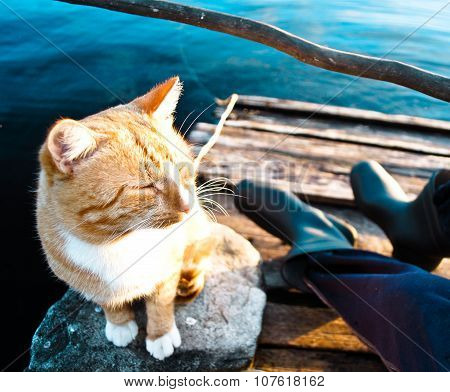Red cat waiting fish catch