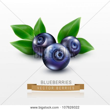 three vector blueberries with green leaves isolated on a white background