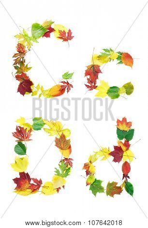 Font made of autumn leaves isolated on white. Letters c and d.