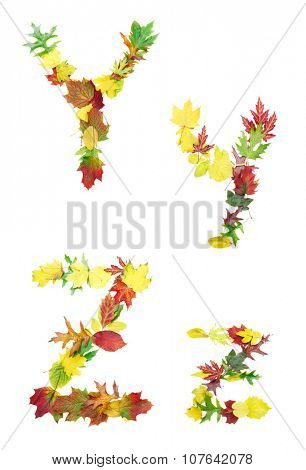 Font made of autumn leaves isolated on white. Letters y and z.