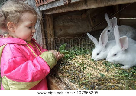 Preschooler Blonde Girl Feeding Farm Domestic Rabbits With Fleawort Leaf