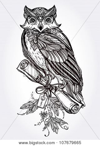 Hand drawn vintage Owl with a letter manuscript.