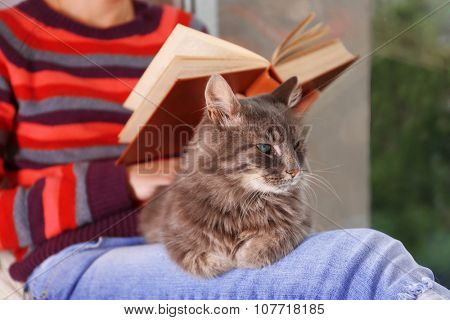 Reading woman sitting on window boar with cat on knees poster