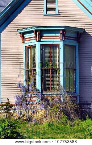 Bay Window And Wysteria