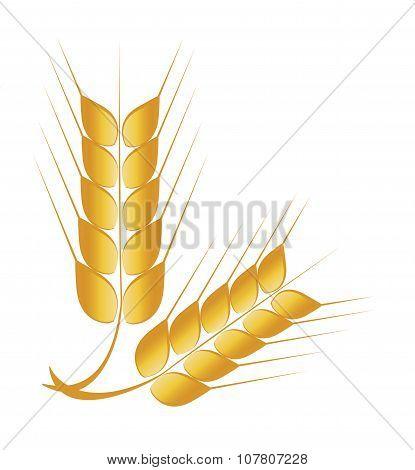 Wheat, Barley or Rye