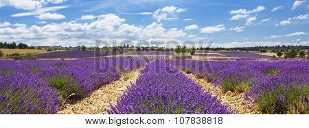 Panoramic View Of Lavender Field And Cloudy Sky
