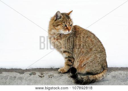 Cat brindle for a walk.