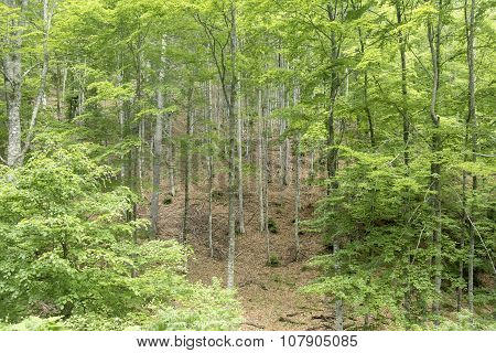 Deciduous Trees Forest