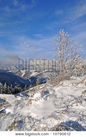 Winter on a hillside