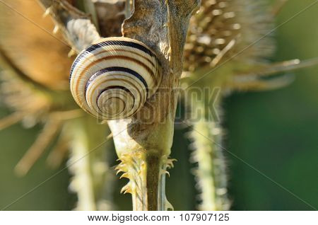 The House Of Snail Glued On Dry Stem
