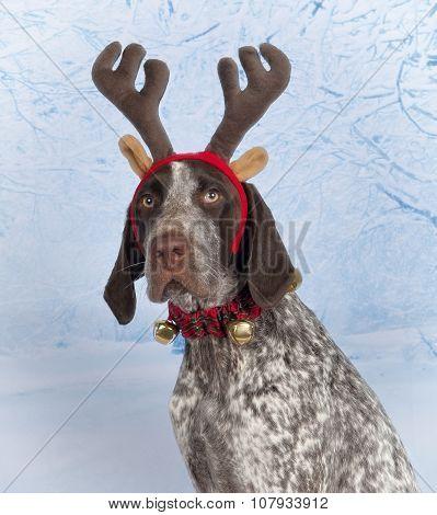 Reindeer GSP