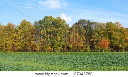 rural landscape in autumn