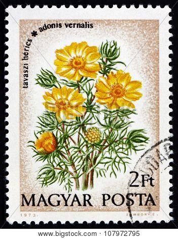 Postage Stamp Hungary 1973 Pheasants Eye