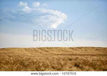 Agricultural Fields With Bird