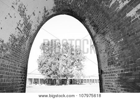 Tree view through fort's arch