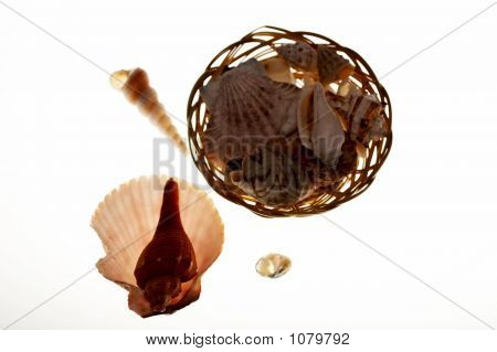 Small Basket With Shells Sea Snail