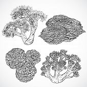 Collection of marine plants and corals. Vintage set of black and white hand drawn marine flora. Isolated vector illustration in line art style.Design for summer beach, decorations. poster
