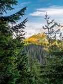 Mount Giewont seen through the spruce trees from the alpine trail in the Tatra mountains, Poland poster