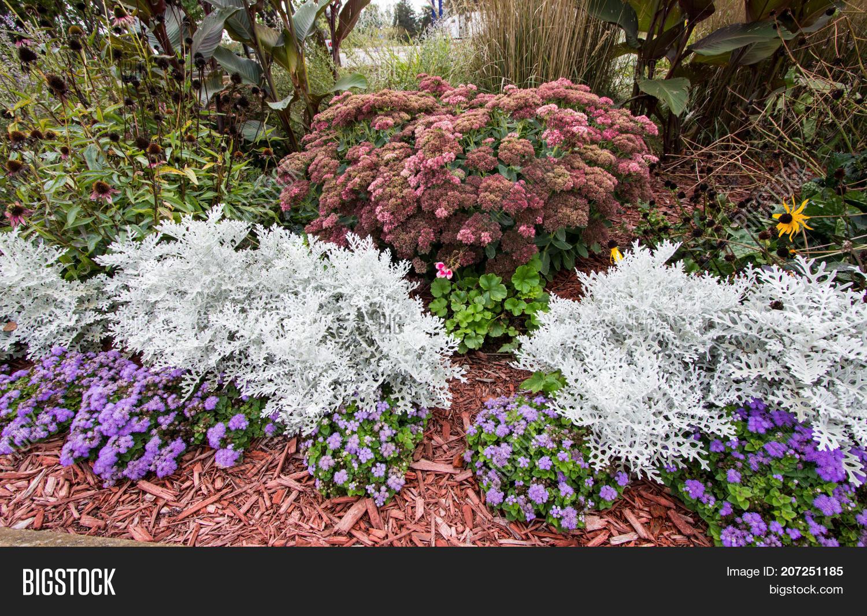 Summer Garden Annuals Image Photo Free Trial Bigstock