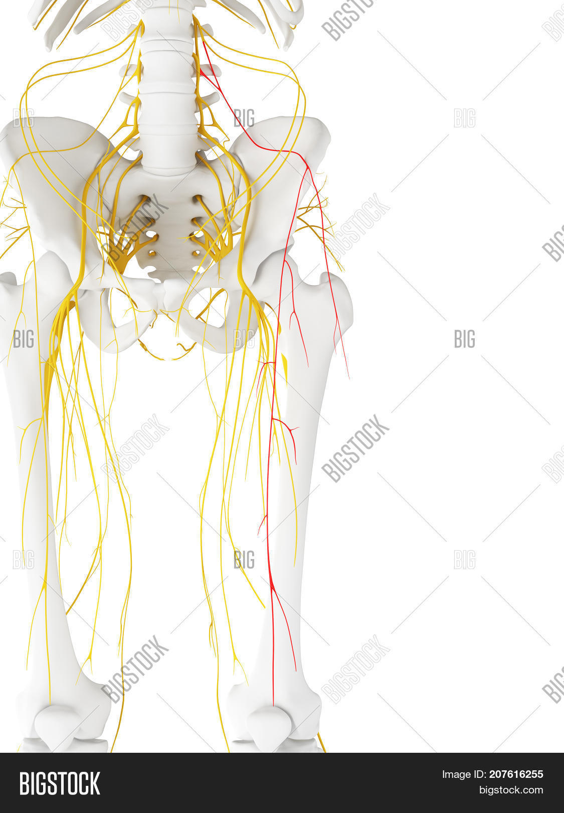 3d Rendered Medically Image Photo Free Trial Bigstock