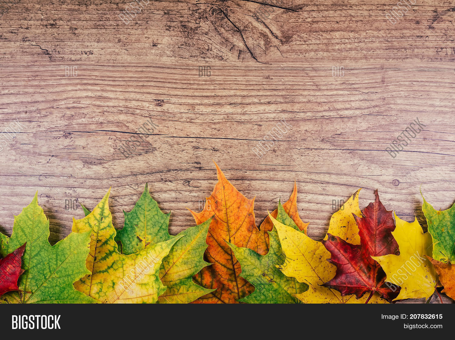 Autumn Leaf Life Cycle Background With Colorful Fall Maple Leaves On Rustic Wooden Table