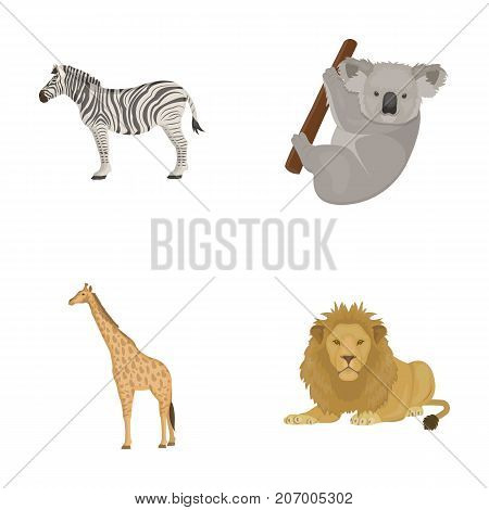 African zebra, animal koala, giraffe, wild predator, lion. Wild animals set collection icons in cartoon style vector symbol stock illustration .