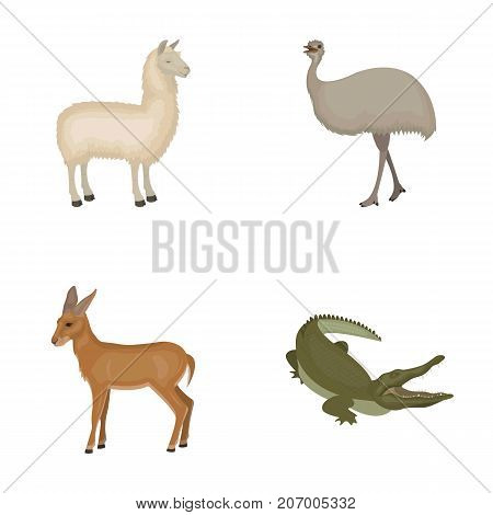 lama, ostrich emu, young antelope, animal crocodile. Wild animal, bird, reptile set collection icons in cartoon style vector symbol stock illustration .