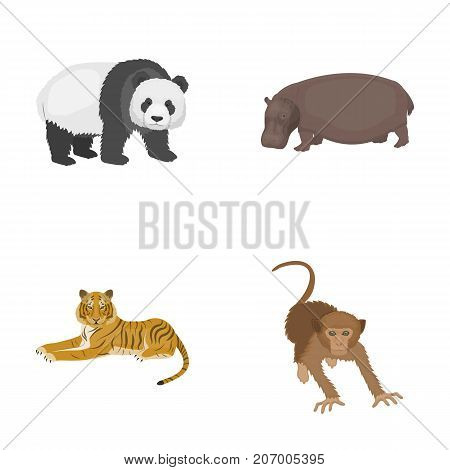 Bamboo bear, hippopotamus, wild animal tiger, monkey . Wild animal set collection icons in cartoon style vector symbol stock illustration .