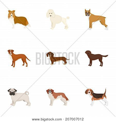Dachshund, laika, poodle and other  icon in cartoon style.Boxer, rottweiler, bulldog, icons in set collection