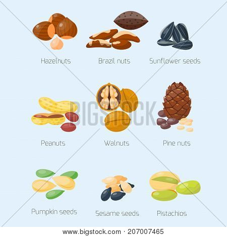 Piles of different nuts pistachio hazelnut almond peanut walnut cedar nut and brazil tasty seed vector illustration. Organic collection nutshell group assortment vegetarian nutrition.