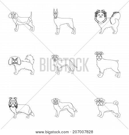 Dachshund, laika, poodle and other  icon in outline style.Boxer, rottweiler, bulldog, icons in set collection