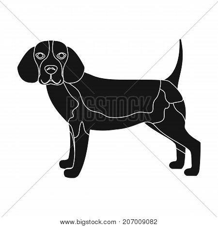 Beagle, single icon in black style.Beagle, vector symbol stock illustration .