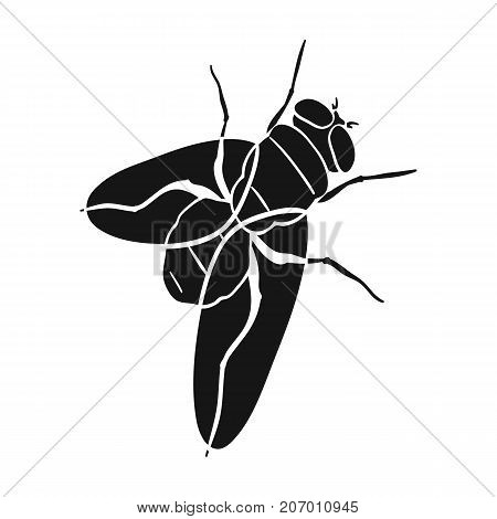The fly is ordinary.Dipterous insect fly single icon in black style vector symbol stock isometric illustration .