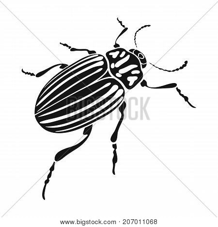 Colorado beetle, a coleopterous insect.Colorado, a harmful insect single icon in black style vector symbol stock isometric illustration .