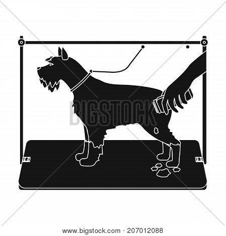 Haircut dogs in a stylish salon. Pet , dog care single icon in black style vector symbol stock illustration .