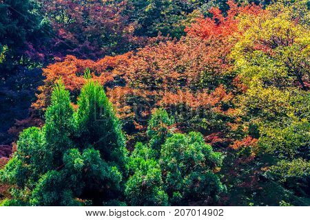 Changing colors in Fall to red leaves