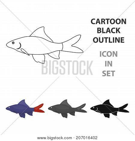 Red Tail Shark fish icon cartoon. Singe aquarium fish icon from the sea, ocean  cartoon.