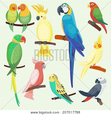 Cartoon parrots set and parrots wild animal birds. Tropical parrots feather zoo birds, tropical fauna macaw flying ara. Various cartoon exotic birds set with parrots vector illustration.
