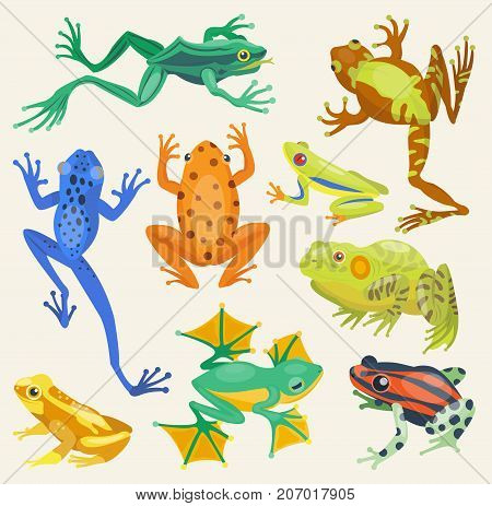 Frog cartoon tropical animal and green frog cartoon nature icons. Funny frog cartoon collection vector illustration. Green, wood, red toxic frogs flat style isolated