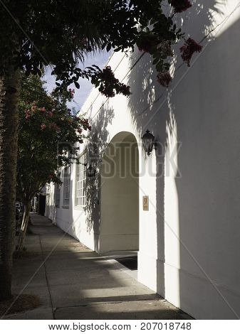 Charleston South Carolina street scene showing early morning shadows of the crepe myrtle and palm trees on a stucco wall