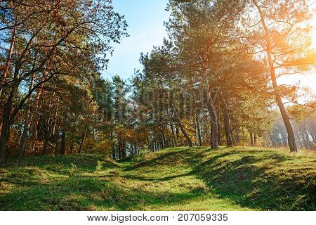 Landscape With Autumn Forest Upon Green Grassland Hills