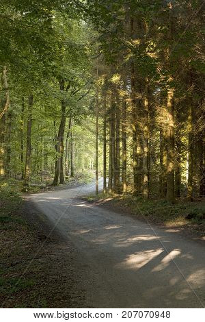 Sunray on a small forest road with spruces