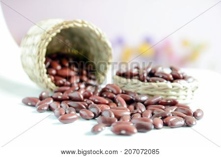 seed, sprout growing from seed in organic soil, Agriculture and Seeding Plant seed growing