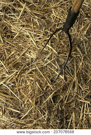 Clos up of fork in the straw of the stable
