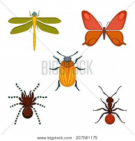 Collection of bugs and insects, icons of dragonfly and butterfly, spider and ant, depicted on vector illustration isolated on white